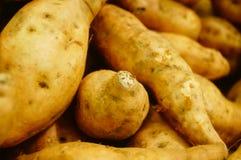Сладкий картофель, произведенный в провинции Цзянси Китая Стоковые Изображения RF