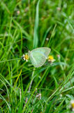 Сладостная белая бабочка Стоковая Фотография RF