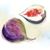 Сладостная смоква Стоковое Фото