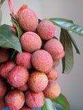 Сладостное lychee тропического плодоовощ Стоковые Изображения