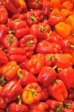 Сладостные болгарские перцы Стоковые Фото
