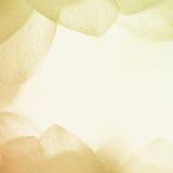 Сладостные лепестки цветка цвета в мягком стиле цвета и нерезкости на текстуре бумаги шелковицы Стоковое Изображение