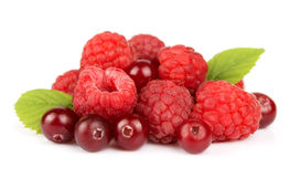 Сладостные ягоды Стоковое Изображение RF