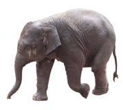 Сладостный азиатский слон младенца Стоковое фото RF