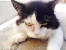 Сладостный кот Стоковое Изображение RF