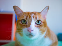 Сладостный кот Стоковые Изображения