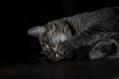 Сладостный кот Стоковая Фотография RF