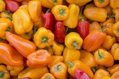 Сладостный красочный перец Стоковая Фотография RF