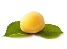 Сладостный плодоовощ абрикоса Стоковое фото RF