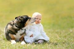 Сладостный ребёнок получая поцелуй от собаки немецкой овчарки любимчика снаружи Стоковое Фото