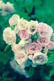 Сладостный розовый цветок стоковая фотография