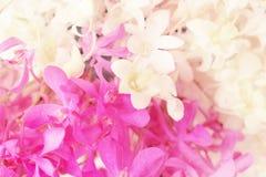 Сладостный флористический цветок предпосылки, белых и фиолетовых орхидеи Стоковое Изображение