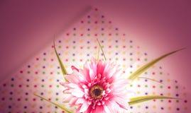 Сладостный gerbera цвета Стоковая Фотография RF