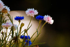 сладостный williams Стоковое Фото