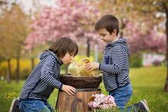 2 сладостных дет, мальчики, играя в парке с утятами Стоковое Изображение