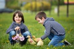 2 сладостных дет, мальчики, играя в парке с утятами Стоковые Фотографии RF