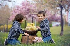 2 сладостных дет, мальчики, играя в парке с утятами Стоковая Фотография