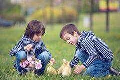 2 сладостных дет, мальчики, играя в парке с утятами Стоковое фото RF