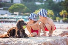 2 сладостных дет, мальчики, играя с собакой на пляже Стоковые Изображения RF