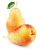 2 сладостных красных желтых плодоовощ груши Стоковые Изображения RF