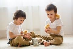 2 сладостных маленьких дет, мальчики preschool, братья, играя острословие Стоковое Фото