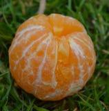 Слезли tangerine Стоковые Фото