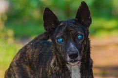 слепая собака Стоковые Изображения