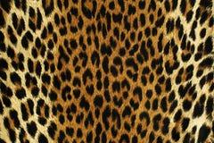 Слепые пятна леопарда стоковые фотографии rf
