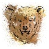 Сделайте эскиз к голове медведя на предпосылке пятен акварели Стоковая Фотография