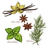Сделайте эскиз к значкам специй vecor и травяных flavorings бесплатная иллюстрация
