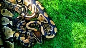 Сделанная по образцу змейка Стоковые Изображения RF