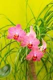 Сделанная по образцу малиновая орхидея стоковое изображение
