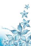 сделанная цветком вода выплеска Стоковая Фотография