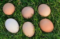 сделанное изображение пасхального яйца Стоковая Фотография RF