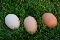 сделанное изображение пасхального яйца Стоковое фото RF