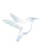 Сделанное эскиз к colibri колибри Стоковые Фотографии RF