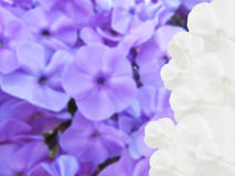 сделанные цветки чертежа предпосылки Стоковое Изображение RF
