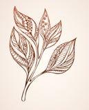 Сделанный по образцу чай ростка Стоковая Фотография RF