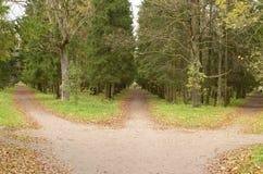 3 следа в лесе Стоковое фото RF
