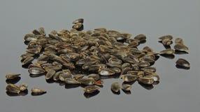09 20 сделали вопросами семян год солнцецвета Стоковые Фотографии RF