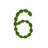 6 сделал от зеленых листьев Стоковое Изображение RF