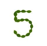 5 сделал от зеленых листьев Стоковое Изображение