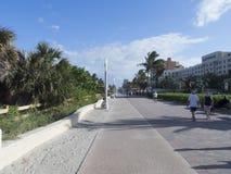 След велосипеда бульвара Голливуда, сосны Пембрука Стоковое Изображение