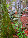 След Вирджиния каньона Whiteoak Стоковые Изображения