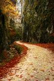 След в лесе во время осени Стоковое Изображение RF