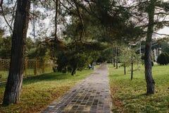 След в парке осени Стоковые Фото