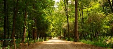 След в парке Стоковая Фотография