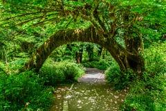 След в тропическом лесе Hoh, олимпийский национальный парк, Вашингтон США стоковое изображение rf