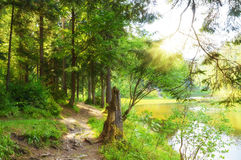 След леса в лесе около озера Стоковое Изображение RF