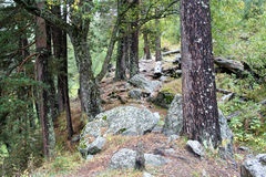 След леса горы к ущелью Shkhelda Стоковое Изображение